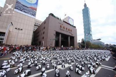1600隻紙貓熊超吸睛 民眾爭相搶拍