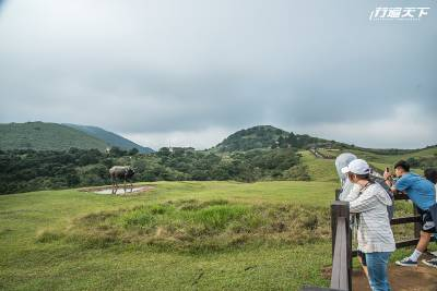 擎天崗草原中央步道開放 530米步道「人牛分離」