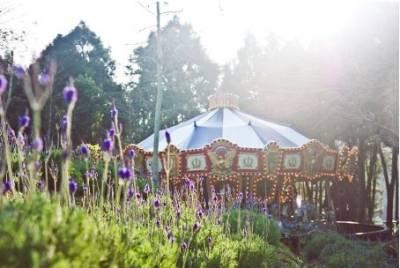 2020薰衣草節開跑!伴著滿山紫色浪漫,來森林住一晚,包下整個薰衣草森林享受早晨野早餐。