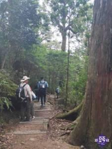八仙山「森」呼吸遊程 山林之旅體驗自然生態