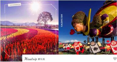 2020新社花海+台中國際花毯節!紅心皇后搭配七彩花卉,打造愛麗絲的奇幻花境探險