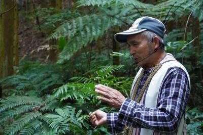 尋訪白蘭溪古道 觀霧國家森林遊樂區邀您尋訪山林中的生活智慧