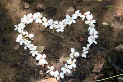 春天集團婚禮好浪漫 南島婚禮 桐花婚禮 愛戀花蓮婚禮回憶滿滿