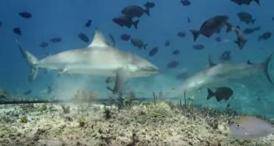 這兩個作死潛水客想實驗鯊魚是不是真的很嗜血,竟將自己的血液倒入鯊魚池中...結果引來群鯊瘋狂攻擊 膽小勿看