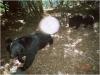 登山請注意 玉山公園大分地區有黑熊出沒