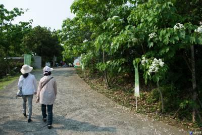 嘉義懷舊輕旅行 搭森鐵賞花遊生態