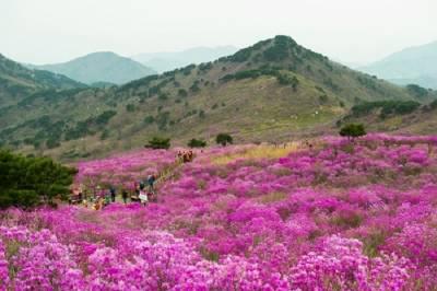 美到韓劇《獄中花》也來這取景!5個你必來的大邱景點~「這個市場」號稱韓國的三大傳統市場之一!