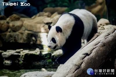 北市動物園暑假首發活動 來幫「圓仔」歡慶4歲生日派對