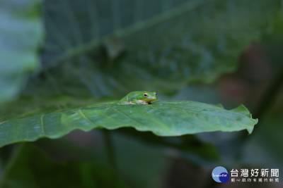 自然生態穿越歷史軌跡 紀錄片流逝滄桑美感