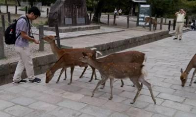 日本旅遊必去景點「奈良」,除了去奈良餵鹿,還有這「6大名勝景點4處必吃當地料理」,在教你如何便宜搭車…