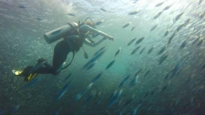 全球唯一保證看到鯨鯊的地方在這!「單隻大魚」與「成群小魚」帶來畫面的是無比震撼...