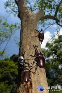 生態之旅避暑勝地 東勢林場昆蟲季登場