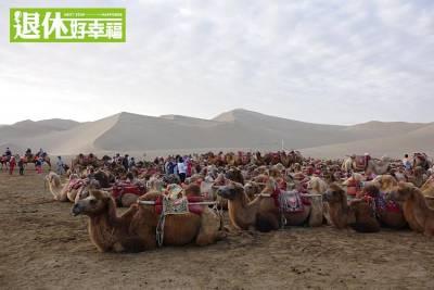 騎駱駝 逛夜市!壯麗大漠敦煌的新玩法~