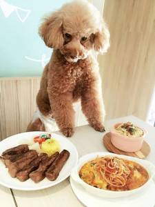 別再放毛孩們一個人顧家了!台北4間寵物友善餐廳推薦