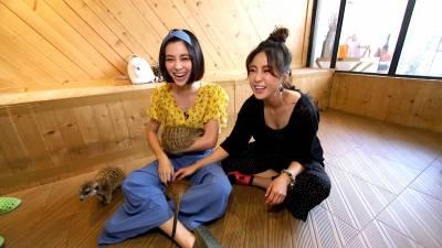 喝咖啡還能抱「狐獴」?!大元與宇珊來到清邁的這間寵物咖啡廳,被萌到不要不要的~