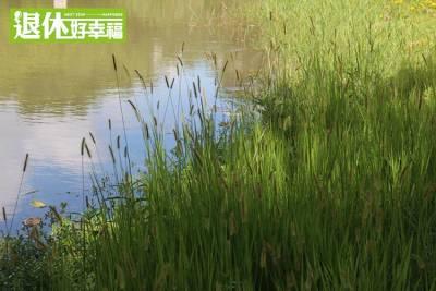 想重溫韓劇《冬季戀歌》的浪漫不用飛出國,台灣也有如此美麗的落雨松秘境,彷彿置身韓劇中...