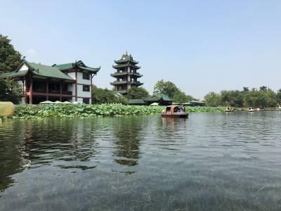桂湖:接天蓮葉無窮碧 映日荷花別樣紅