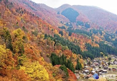「楓吹來的殺」 賞楓行程成秋季旅展亮點