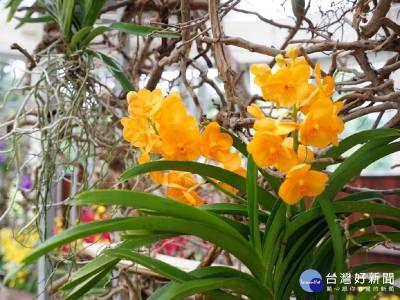 剛柔並濟 北市青年公園展出樹與花的邂逅