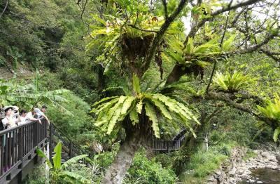 植物界最強住客 免房租還住景觀水岸房