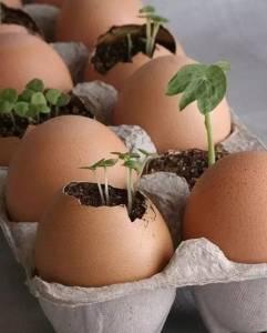 你隨手就扔的雞蛋殼,竟然這麼好用?!看完驚呆了......