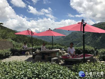 太平雲梯周邊9條遊程 帶您體驗茶香之美
