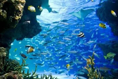 日本水族館一夜死了1235條魚!遊客進去都傻眼了......