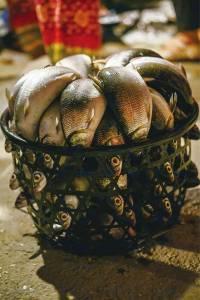 什麼魚?最好─台南虱目魚|台灣好食材