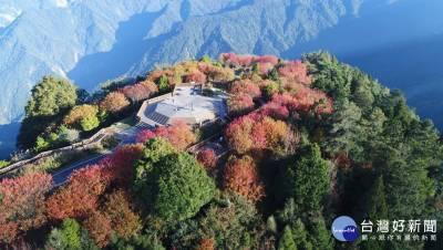 阿里山歲末最美風景 小笠原山「楓」起雲湧