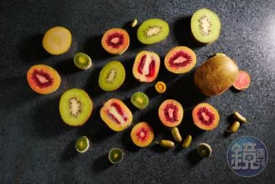 驚!奇異果竟然會辣 怪奇品種大開眼界