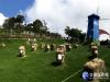 暑假來清境避暑 草原「飛羊」地景藝術吸睛