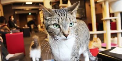 想被肉球襲擊嗎?!到這就對了~ 全球十大愛貓聖地!